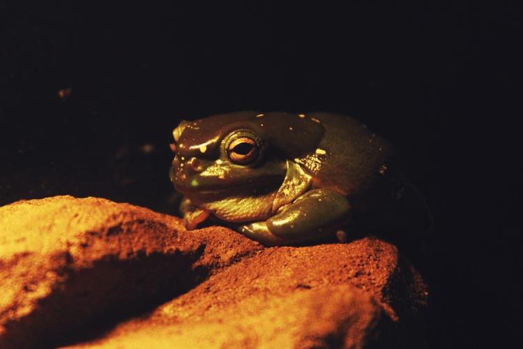 reptile22