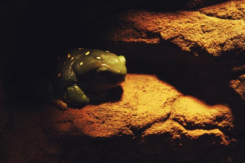 reptile24