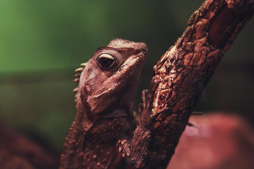 reptile25