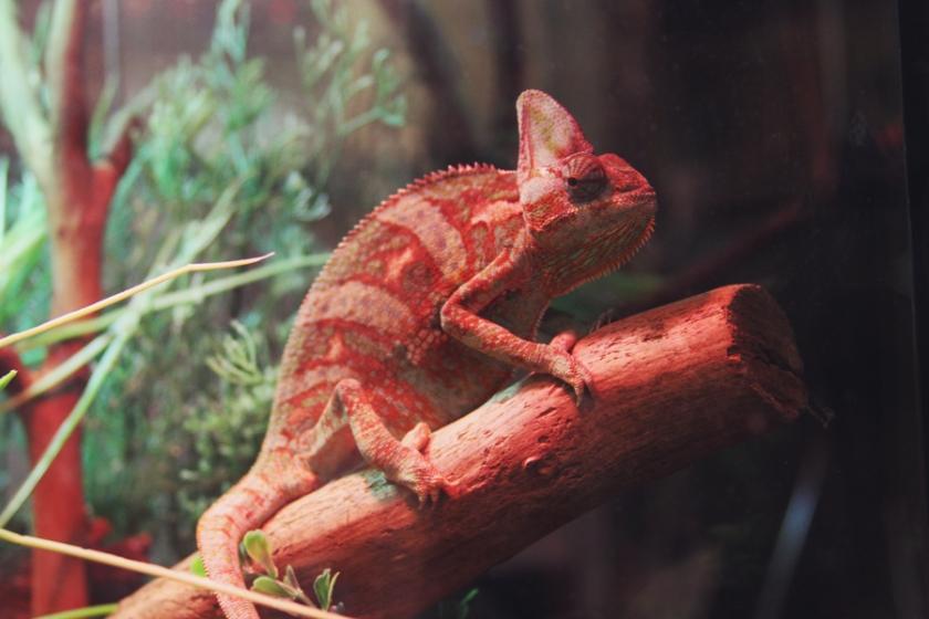 reptile26