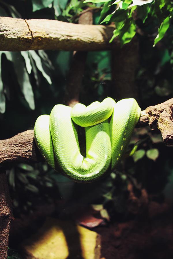 reptile29