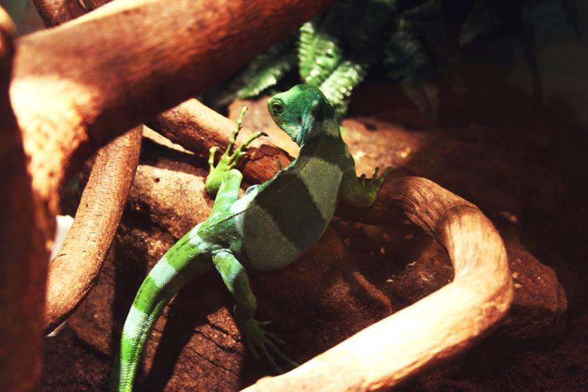 reptile30