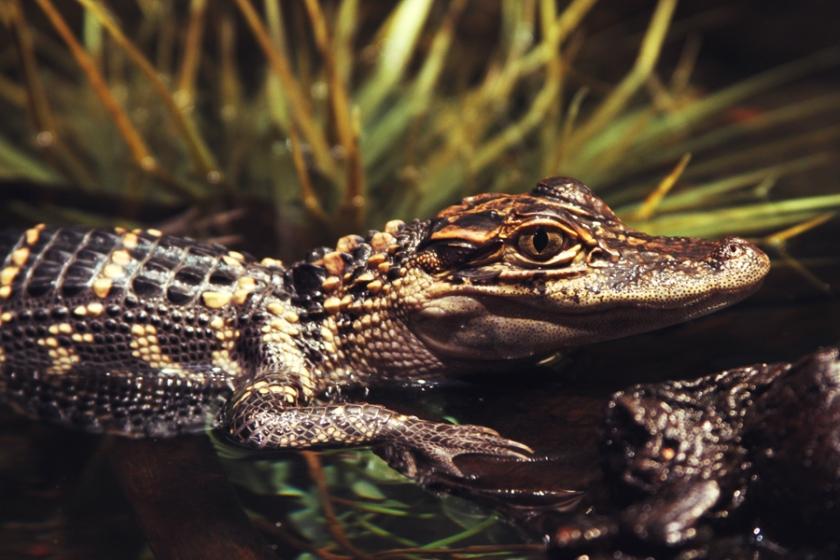 reptile34