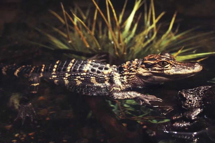 reptile35