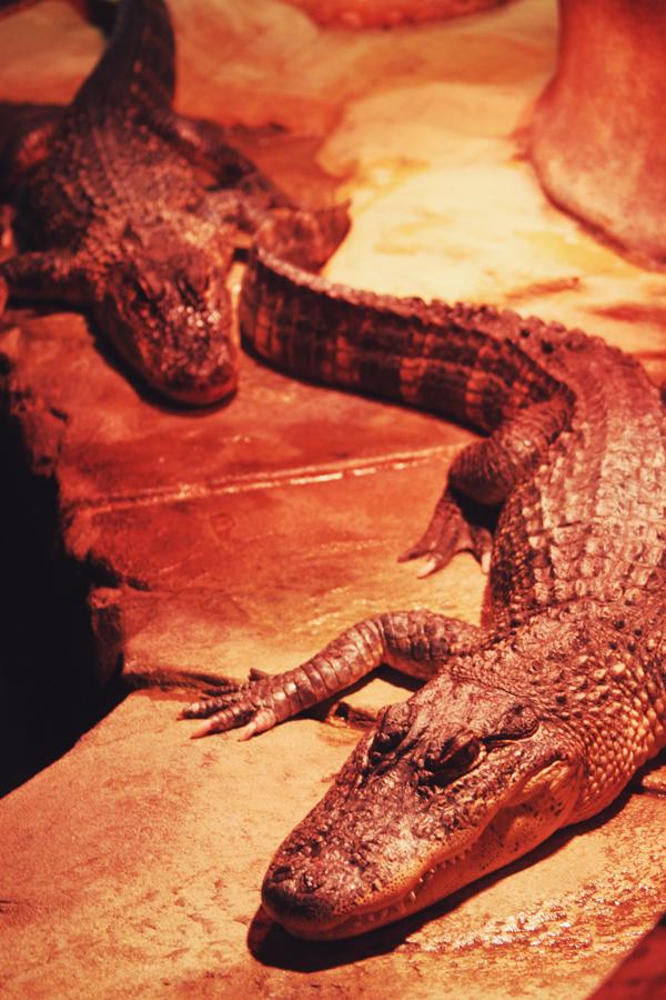 reptile37