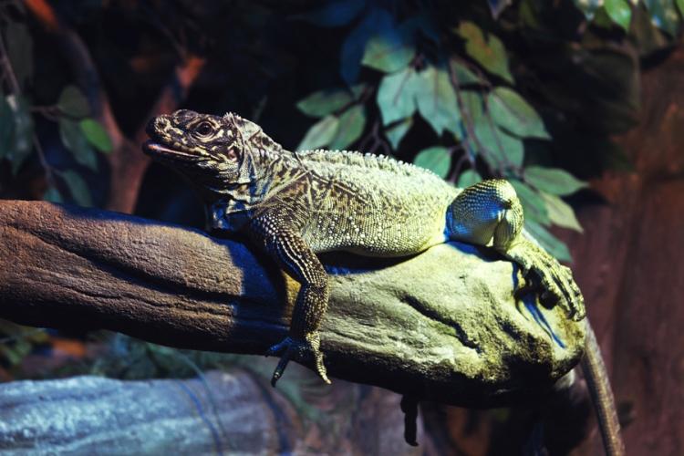 reptile38