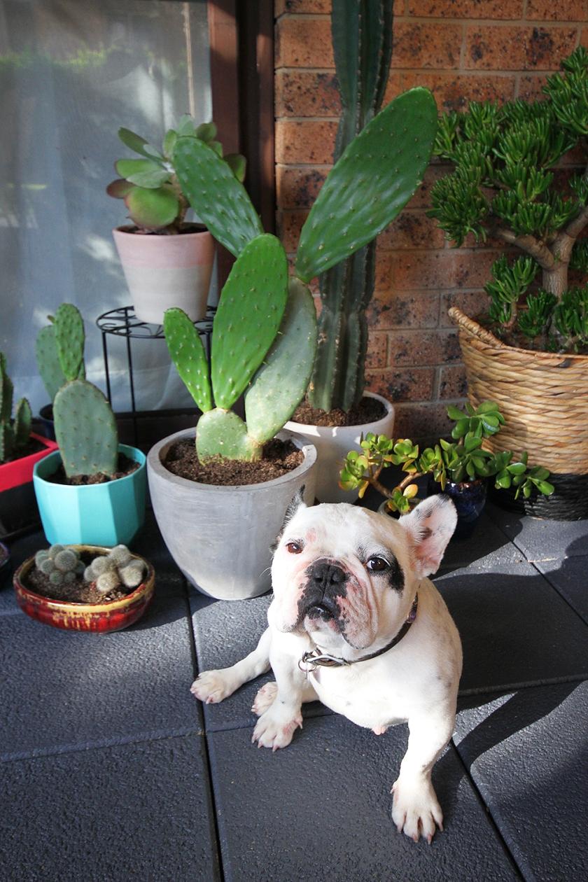patio13